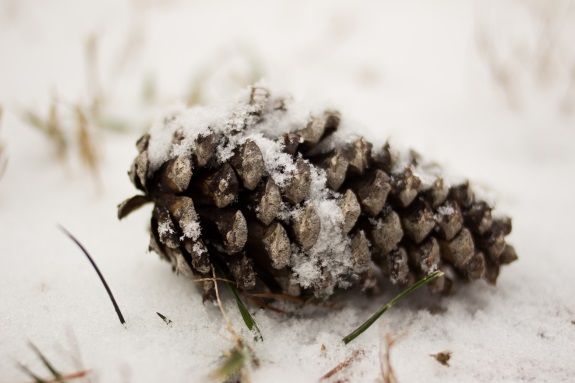 pine-cone_JennaBPhoto