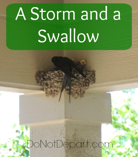 A Storm and a Swallow - a segment of The Marvelous Creator. Summertime Bible study at DoNotDepart.com