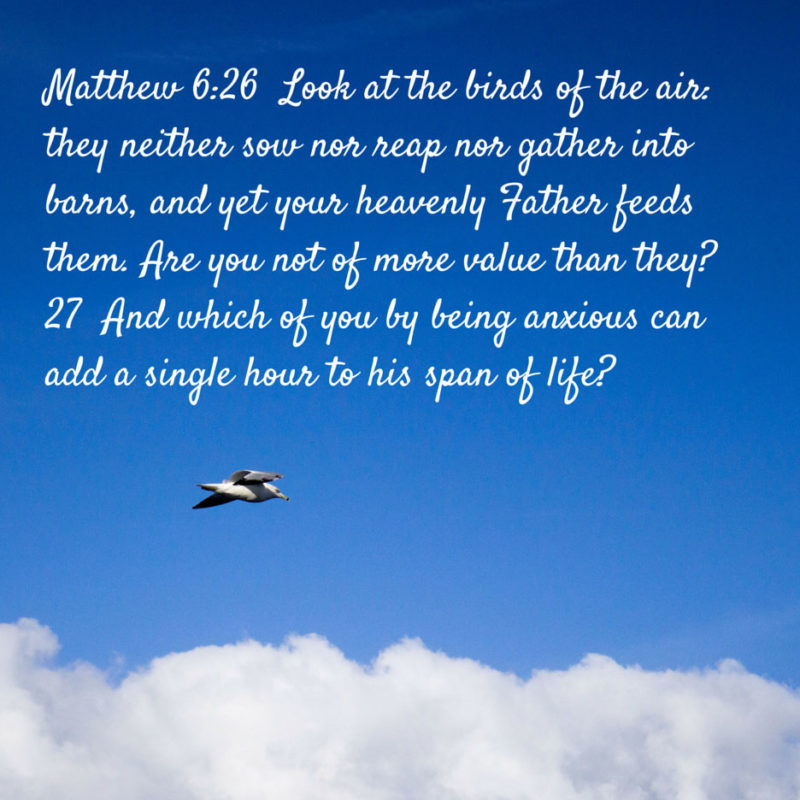 Share A Bird Photo as You Memorize Matthew 6:26-27