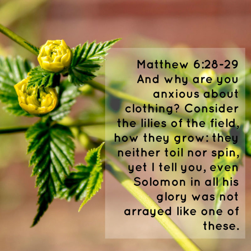 Learn from a Flower – Memorizing Matthew 6:28-29