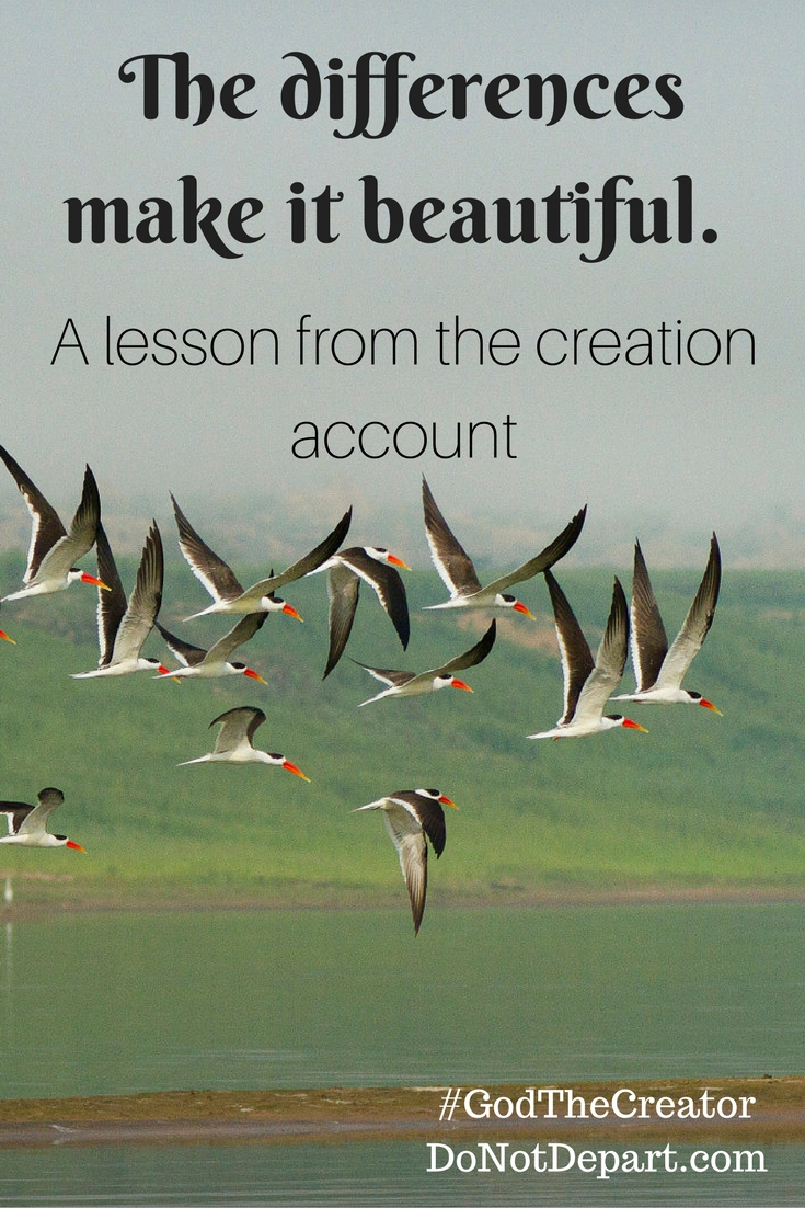 A lesson from the creation account - The differences make it beautiful.
